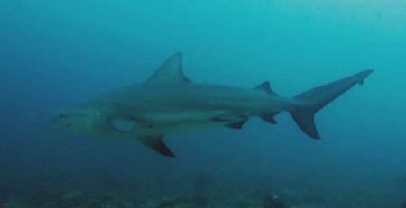 Tiburón blanco aterra unos buceadores