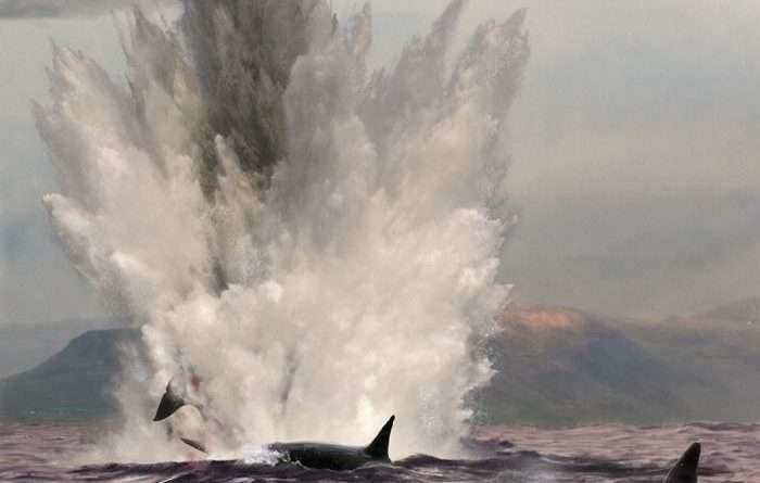 Las orcas indeseables